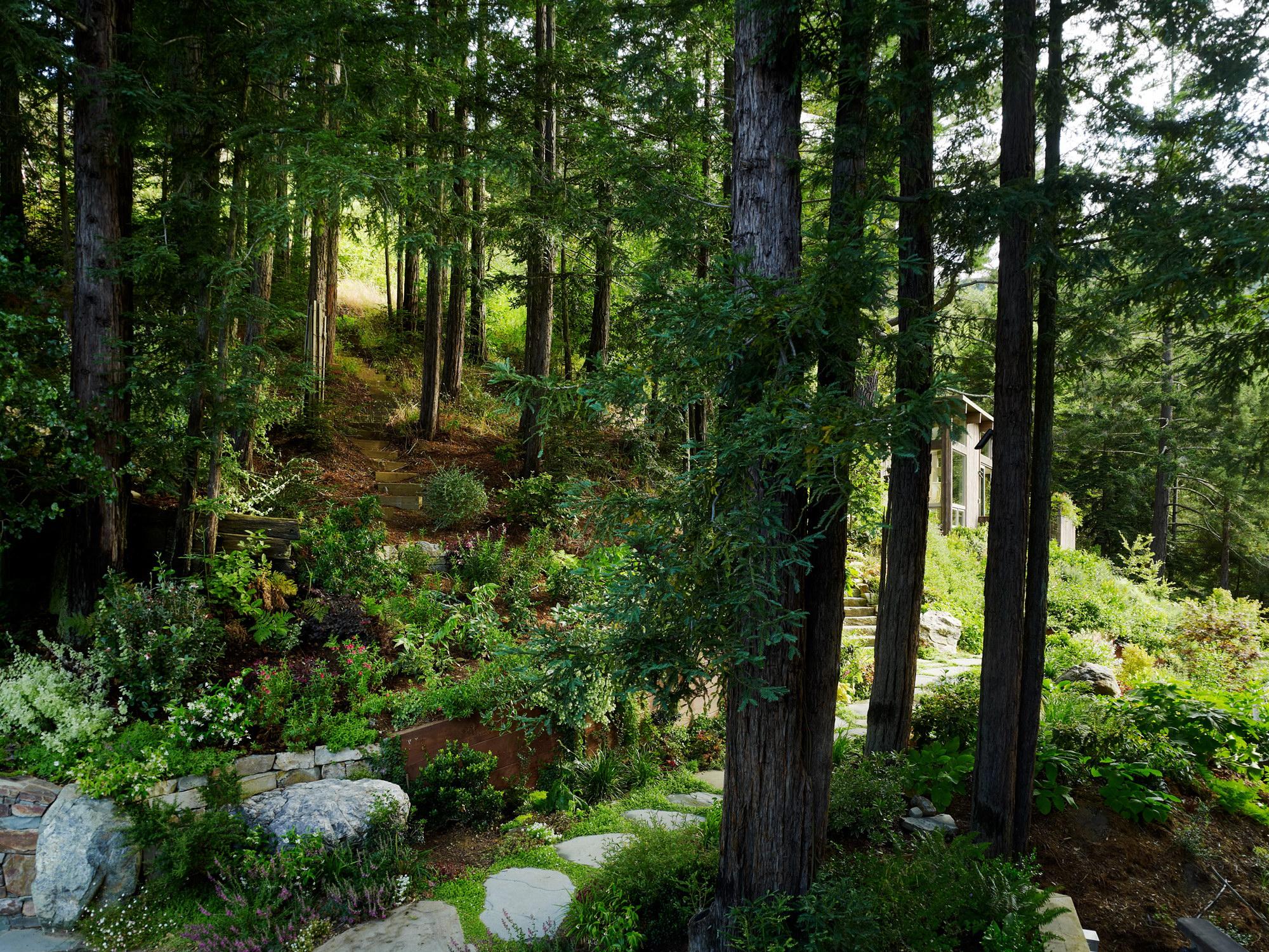 картинки лесного участка