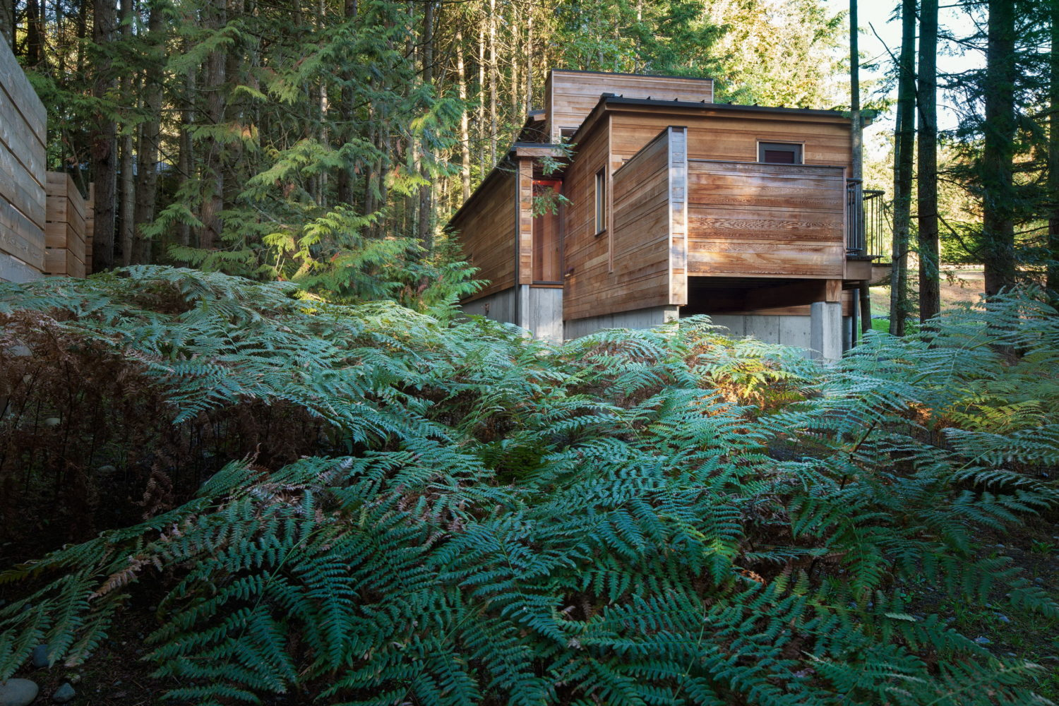 Rainforest Retreat | Small Dwelling by AGATHOM Co.