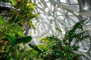 The Spheres in the New Amazon Headquarters