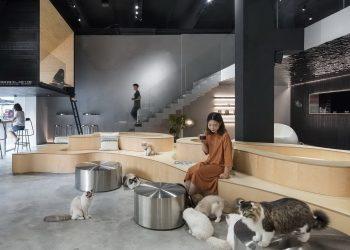Meow Restaurant by E Studio