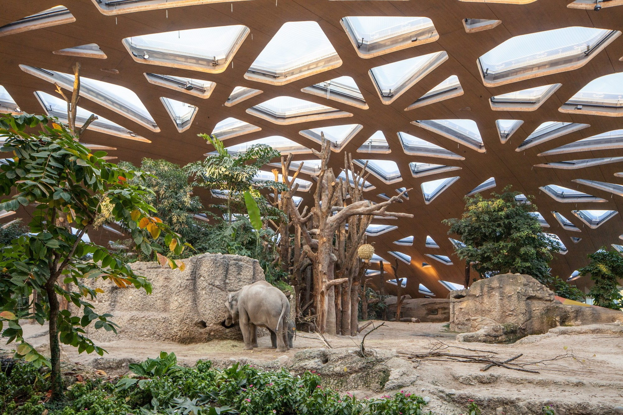 Elephant House Zoo Zürich by MSA